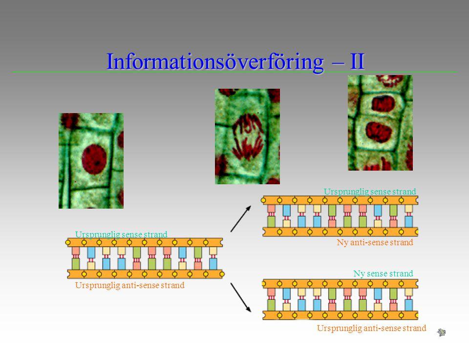 Informationsöverföring – II