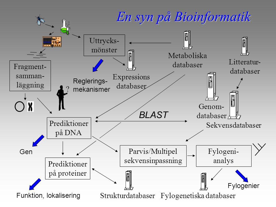 En syn på Bioinformatik