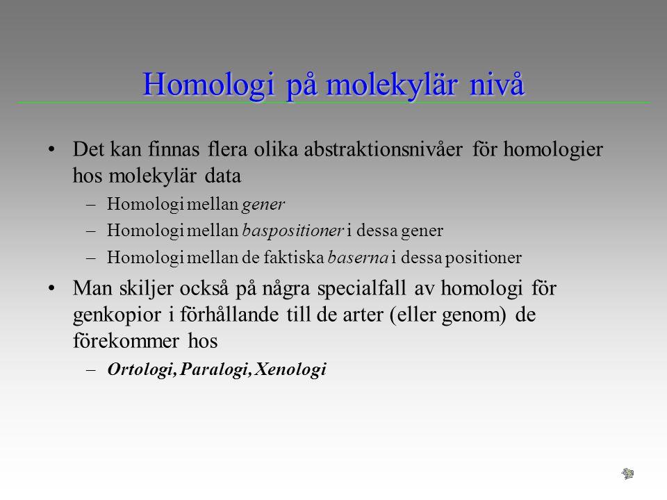 Homologi på molekylär nivå