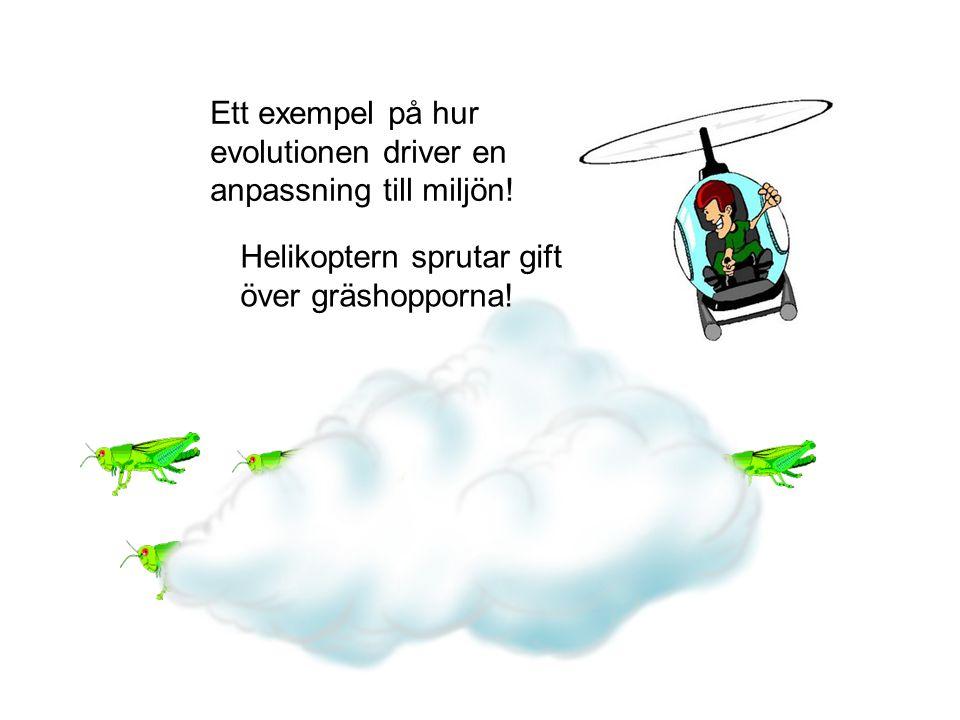 Ett exempel på hur evolutionen driver en anpassning till miljön!