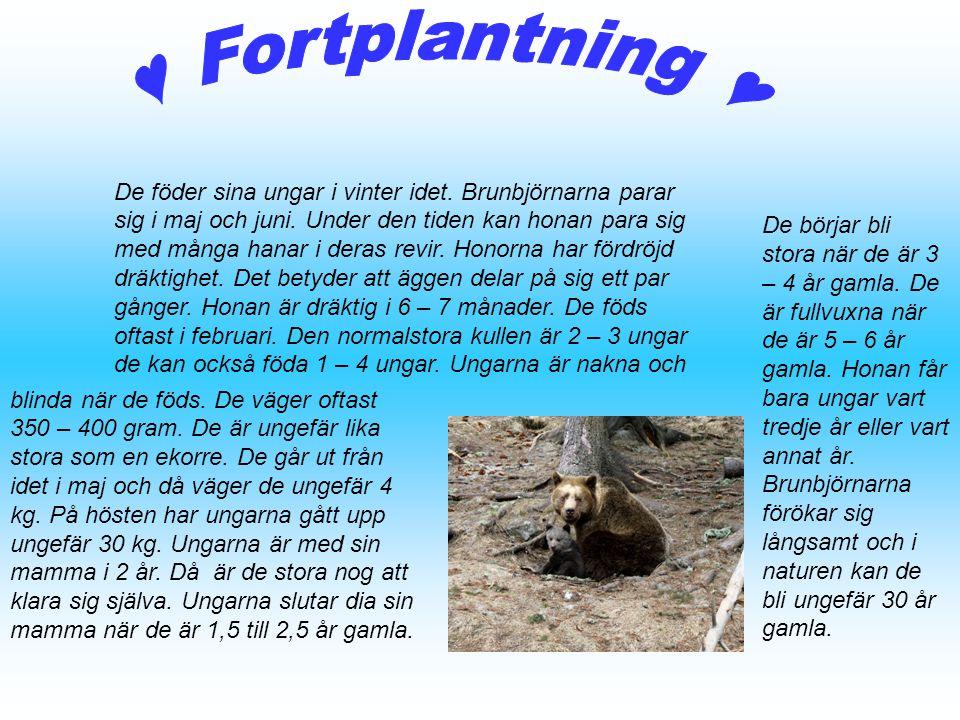 ♥ Fortplantning ♥