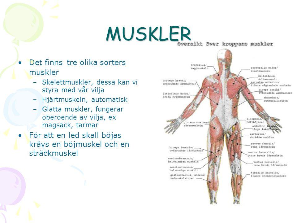 MUSKLER Det finns tre olika sorters muskler