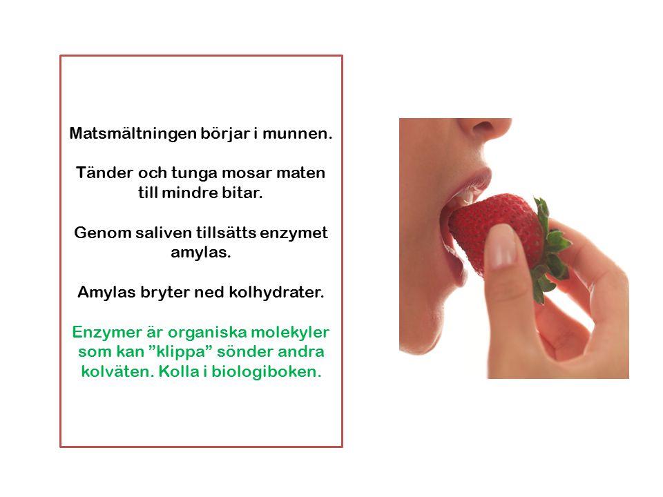Matsmältningen börjar i munnen.