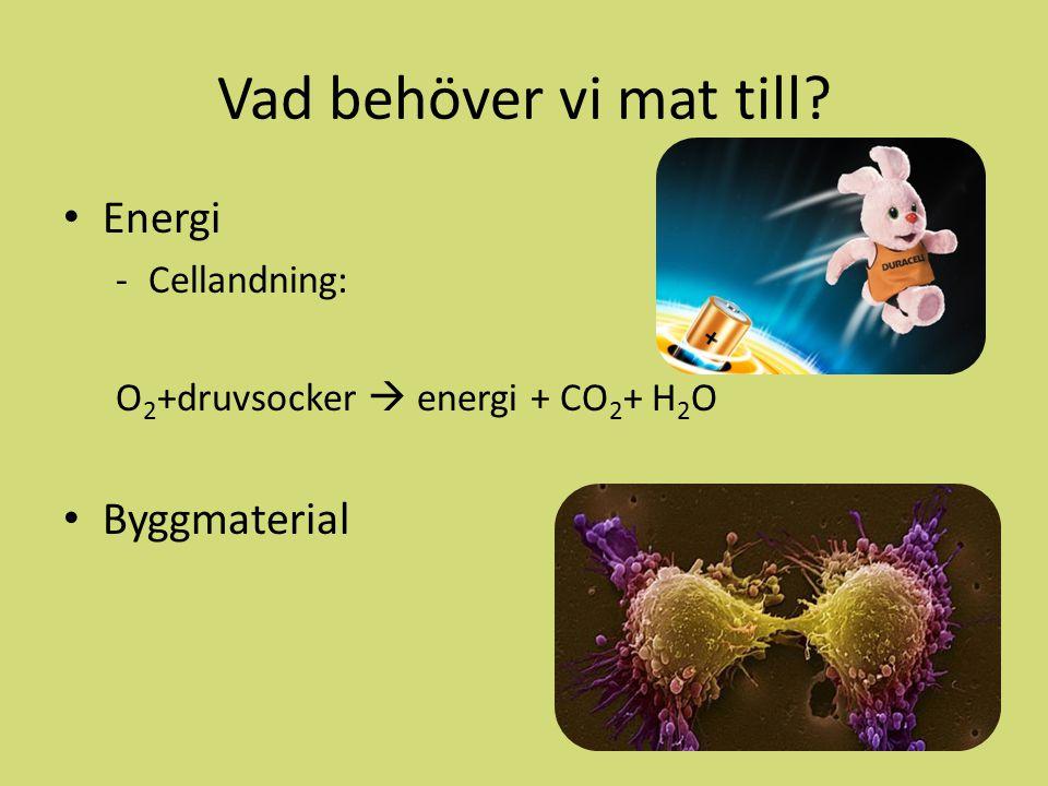 Vad behöver vi mat till Energi Byggmaterial Cellandning: