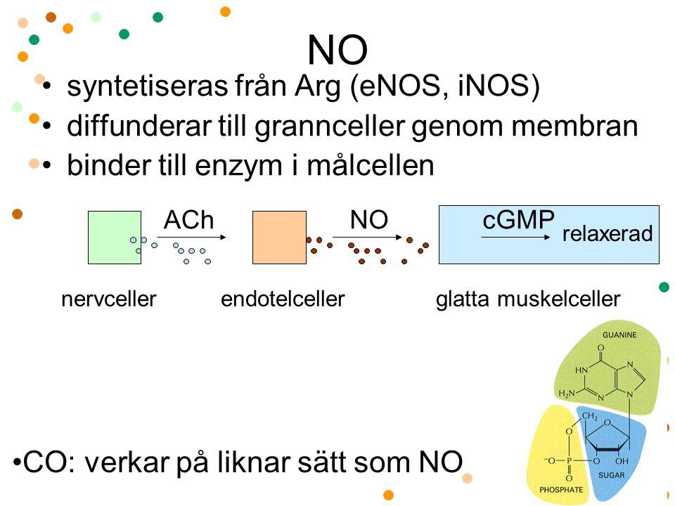 NO syntetiseras från Arg (eNOS, iNOS)