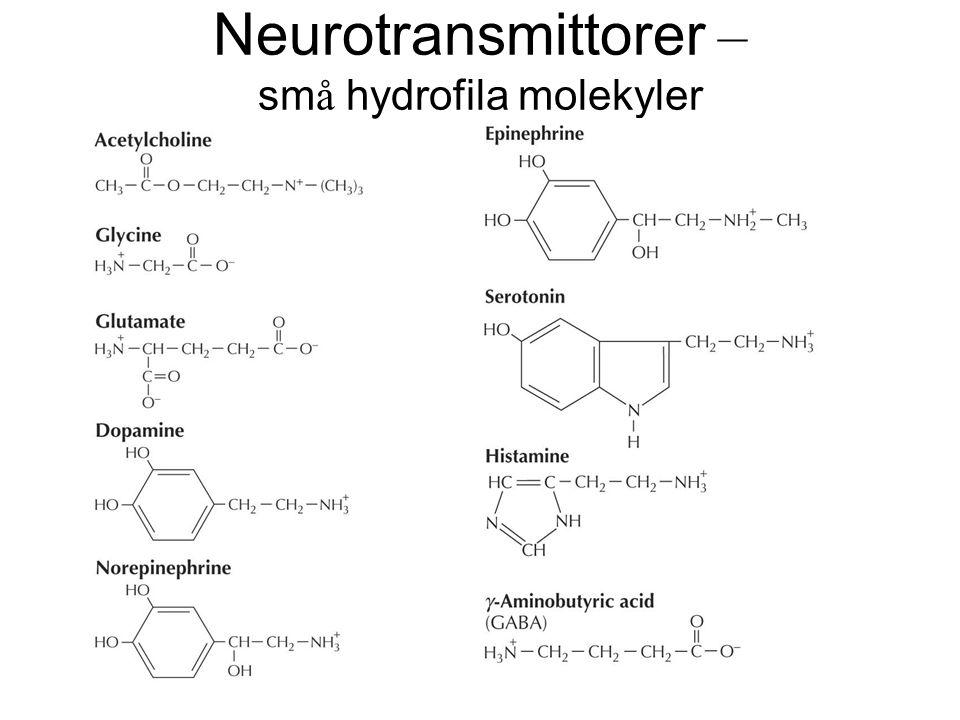 Neurotransmittorer – små hydrofila molekyler