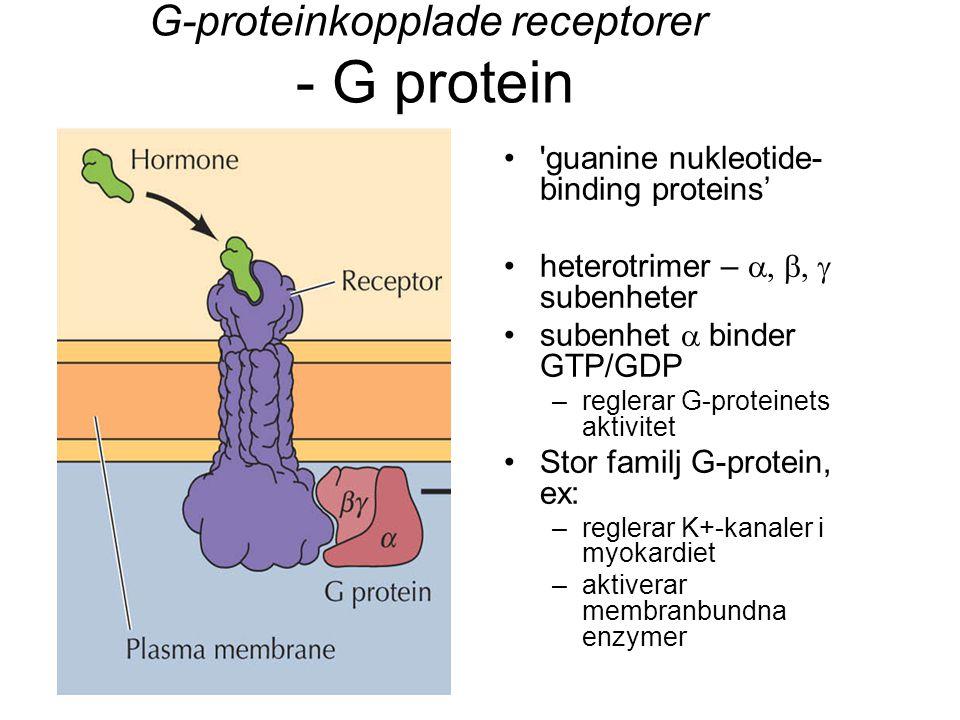 G-proteinkopplade receptorer