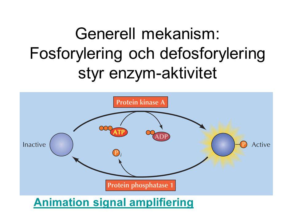 Generell mekanism: Fosforylering och defosforylering styr enzym-aktivitet