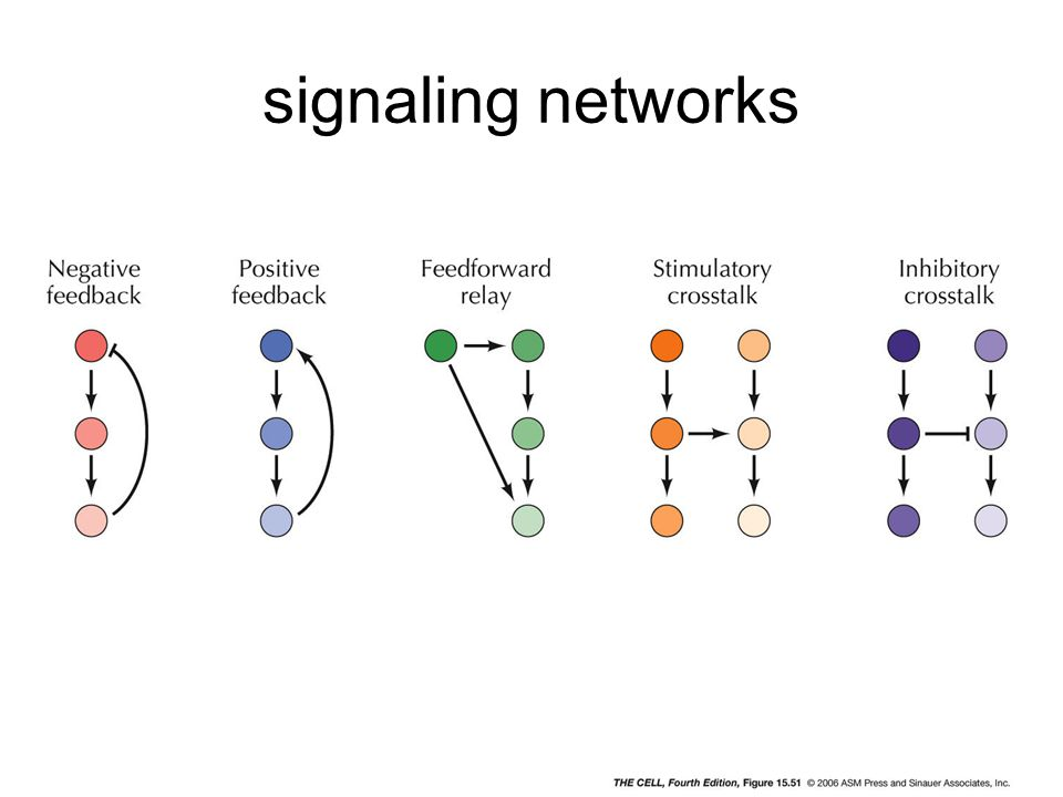 signaling networks cell4e-fig-15-51-0.jpg
