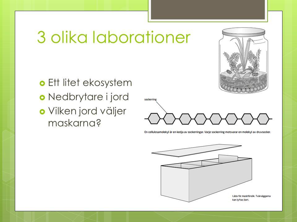 3 olika laborationer Ett litet ekosystem Nedbrytare i jord