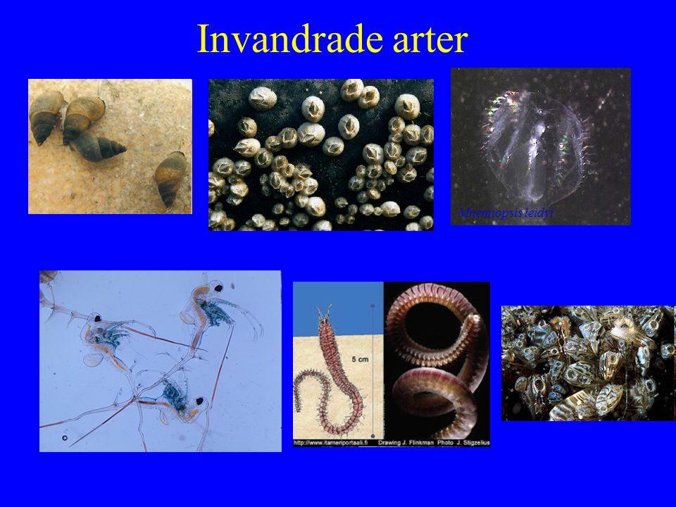 Invandrade arter Mnemiopsis leidyi