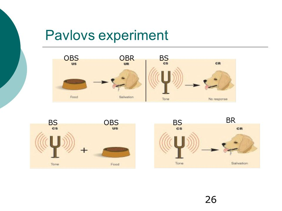 Pavlovs experiment OBS OBR BS BR BS OBS BS