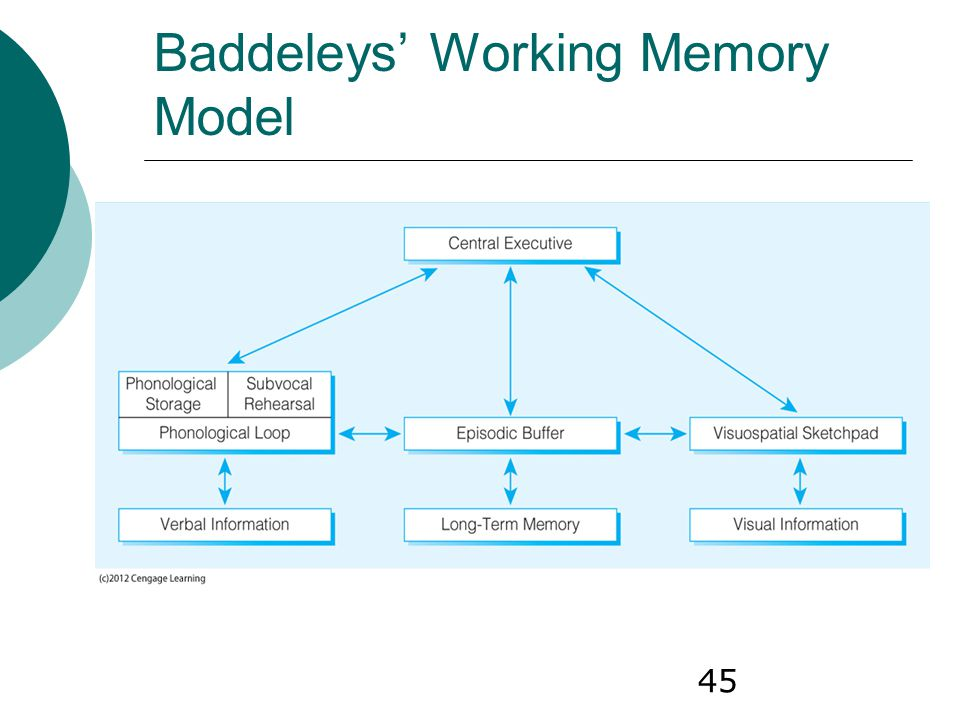 Baddeleys' Working Memory Model