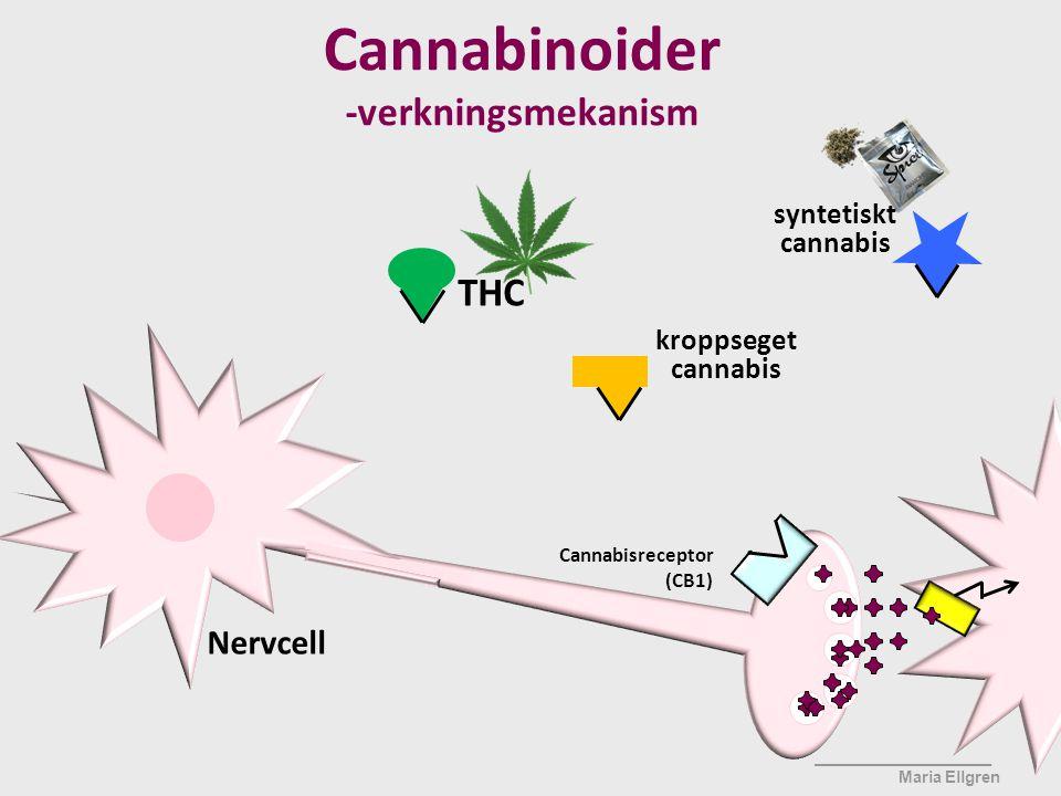 Cannabinoider -verkningsmekanism THC Nervcell syntetiskt cannabis