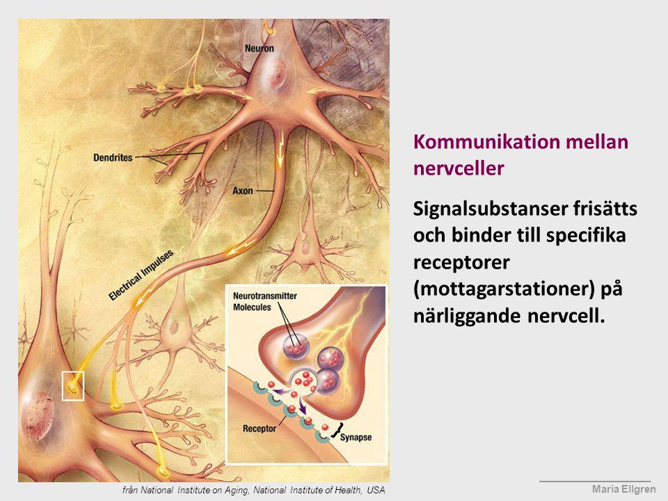 Kommunikation mellan nervceller