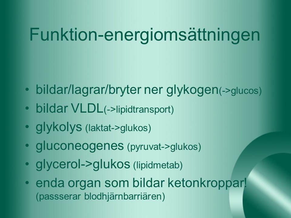 Funktion-energiomsättningen
