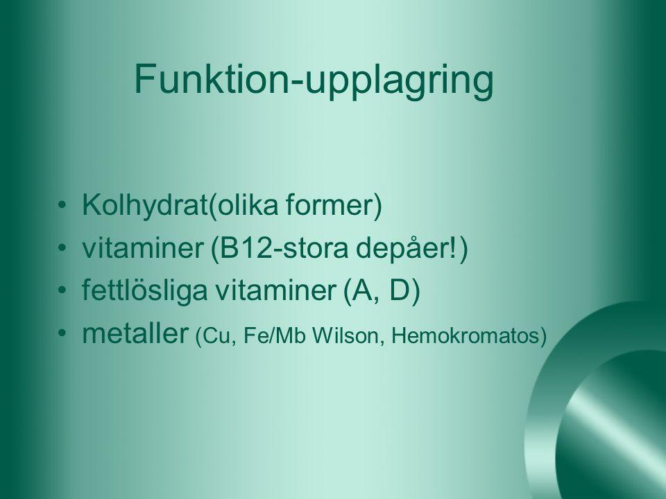 Funktion-upplagring Kolhydrat(olika former)