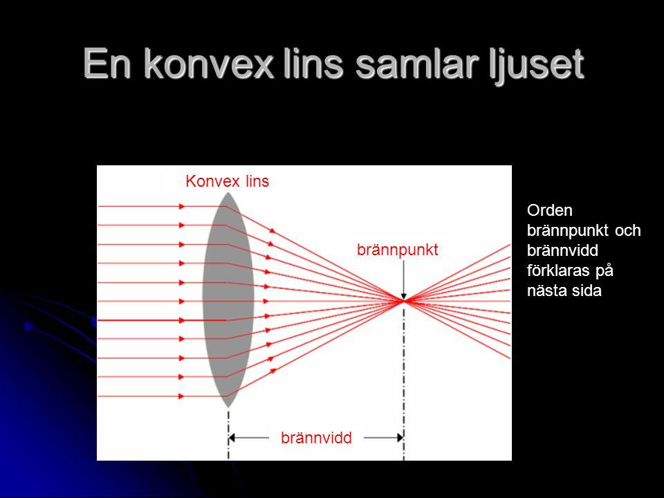 En konvex lins samlar ljuset