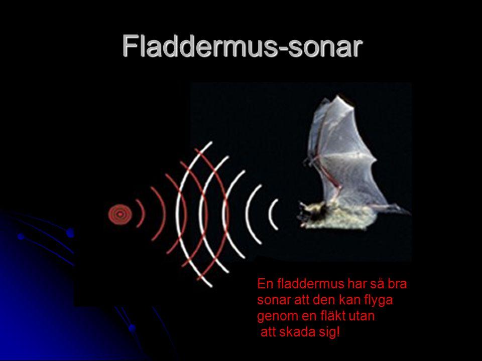 Fladdermus-sonar En fladdermus har så bra sonar att den kan flyga