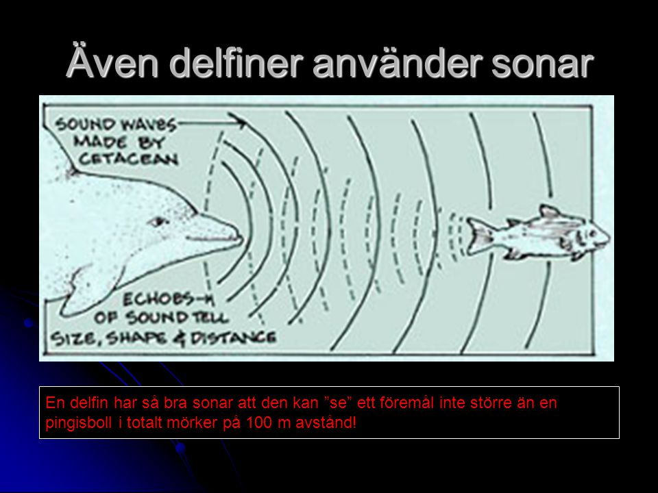 Även delfiner använder sonar