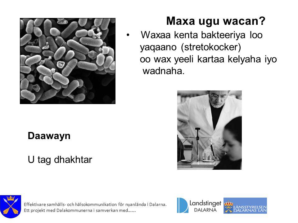 Maxa ugu wacan Waxaa kenta bakteeriya loo yaqaano (stretokocker)