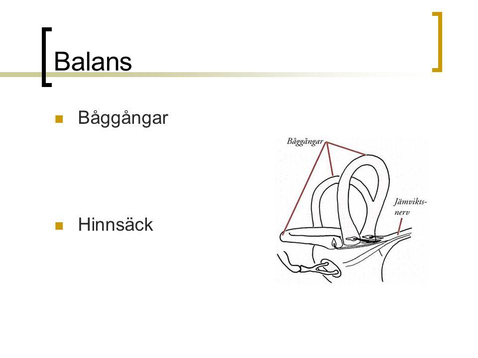 Balans Båggångar Hinnsäck