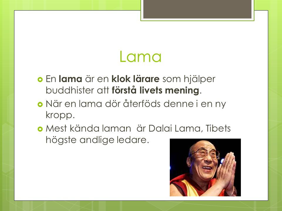Lama En lama är en klok lärare som hjälper buddhister att förstå livets mening. När en lama dör återföds denne i en ny kropp.