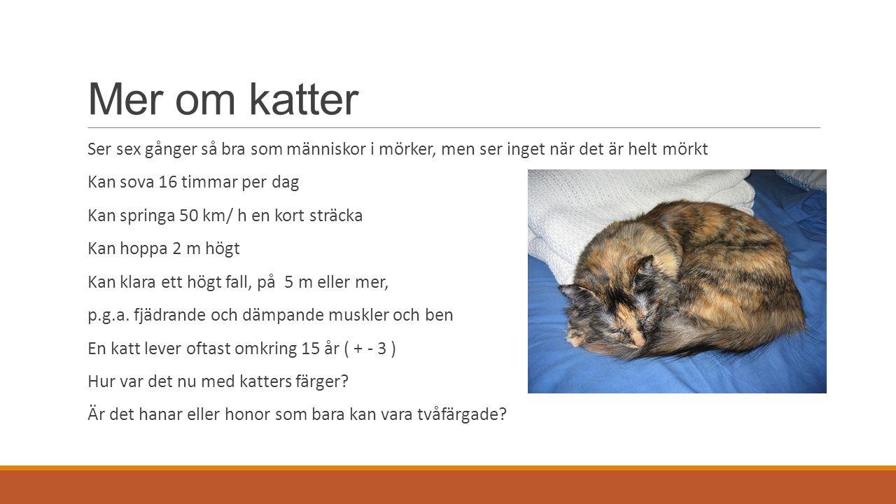 Mer om katter Ser sex gånger så bra som människor i mörker, men ser inget när det är helt mörkt. Kan sova 16 timmar per dag.