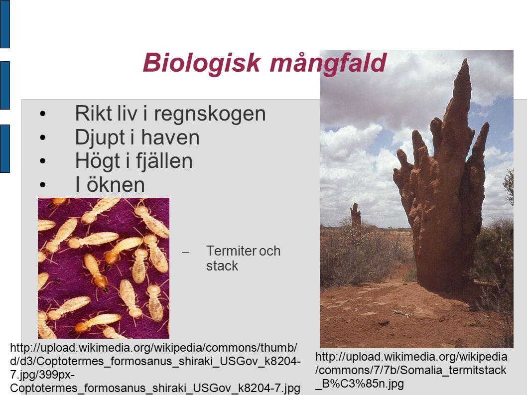 Biologisk mångfald Rikt liv i regnskogen Djupt i haven Högt i fjällen