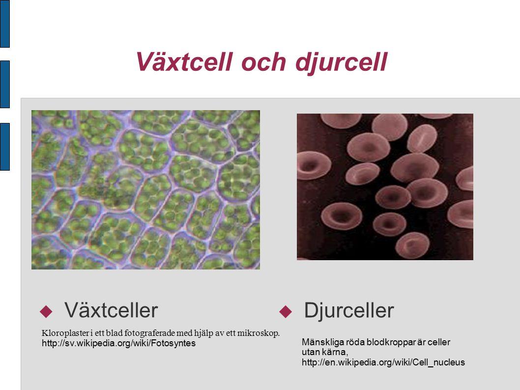 Växtcell och djurcell Växtceller Djurceller
