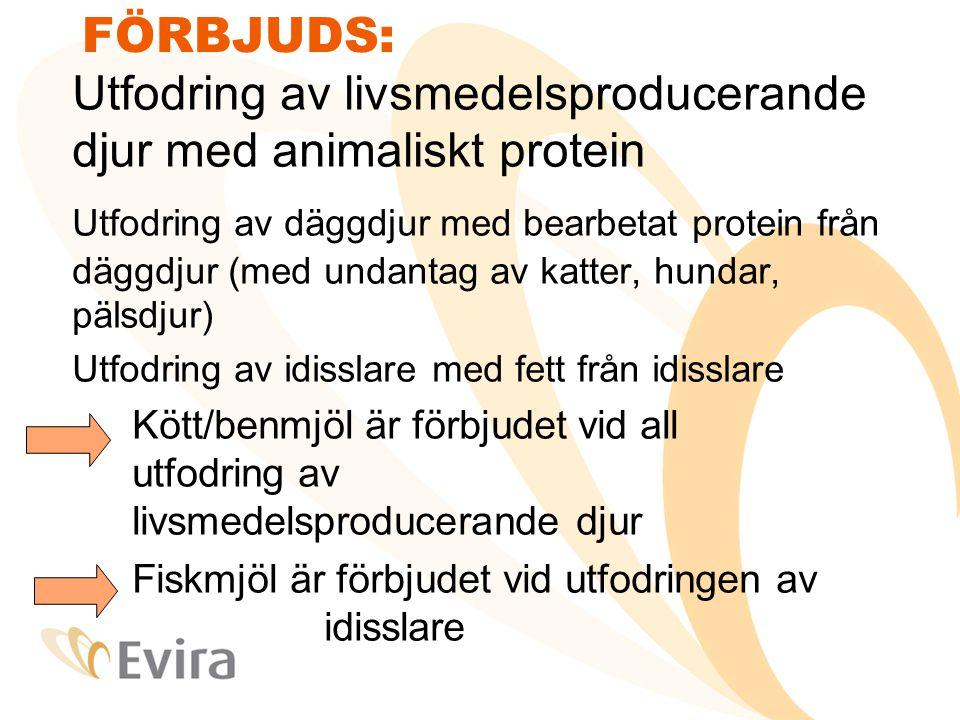 FÖRBJUDS: Utfodring av livsmedelsproducerande djur med animaliskt protein.