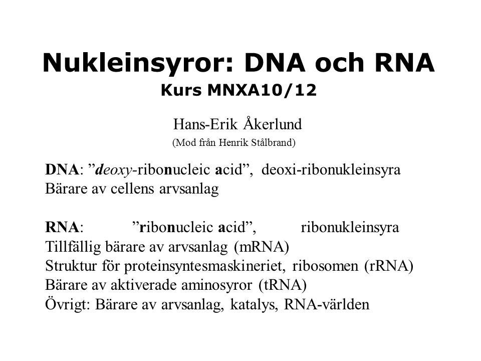 Nukleinsyror: DNA och RNA