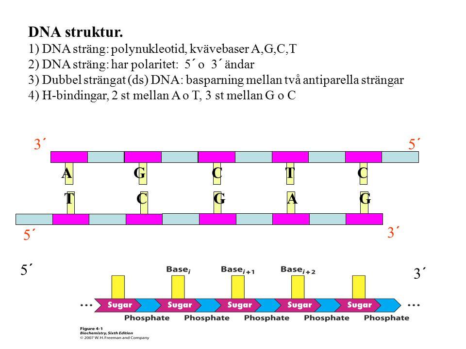 DNA struktur. A G C T C T C G A G 3´ 5´ 5´ 3´