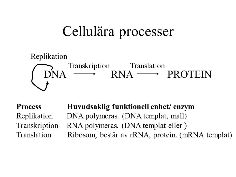 Cellulära processer DNA RNA PROTEIN Replikation