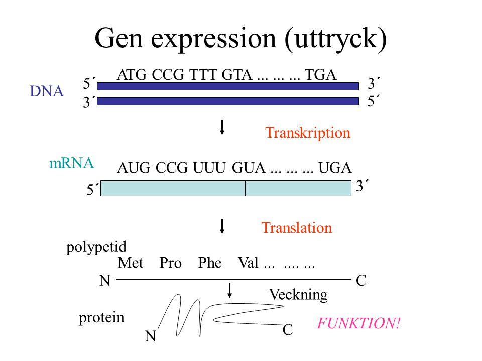 Gen expression (uttryck)