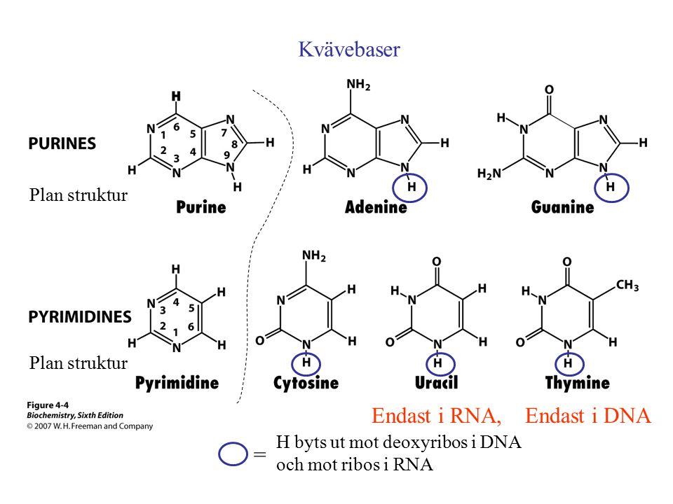 Endast i RNA, Endast i DNA