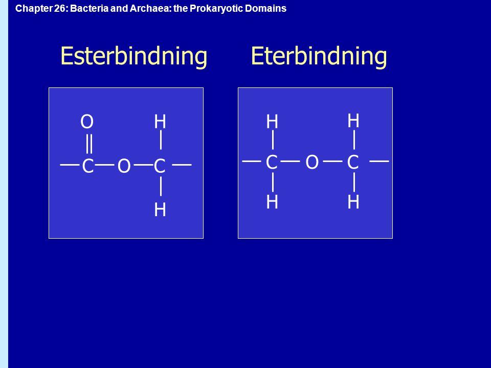 Esterbindning Eterbindning O H H H C O C C O C H H H