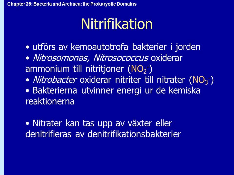 Nitrifikation utförs av kemoautotrofa bakterier i jorden