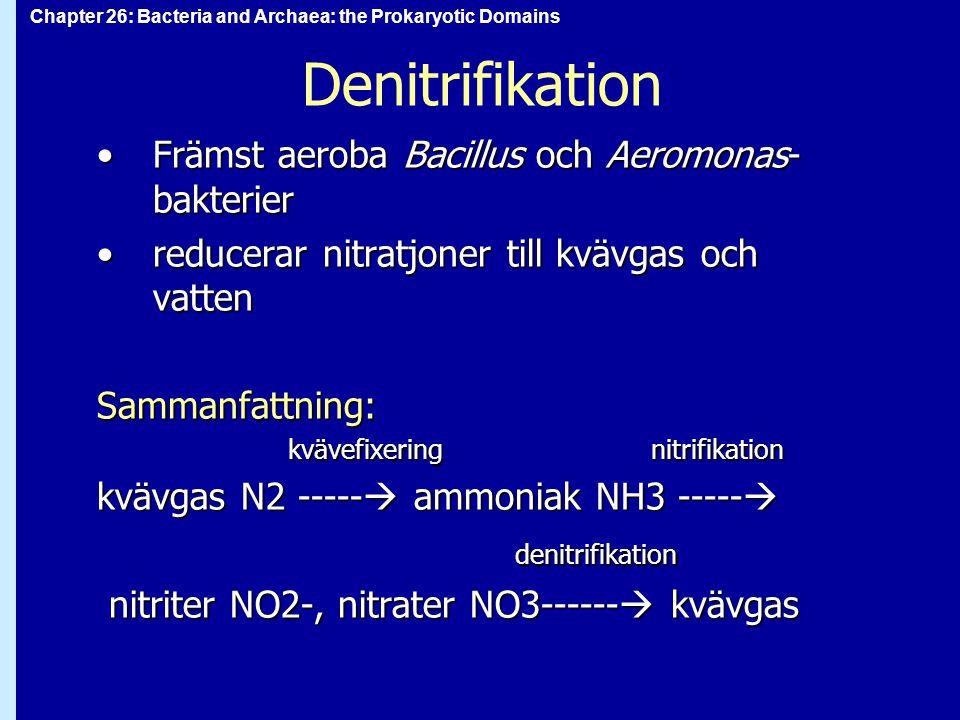 Denitrifikation Främst aeroba Bacillus och Aeromonas-bakterier