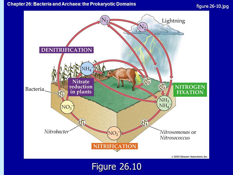 figure 26-10.jpg Figure 26.10 Figure 26.10