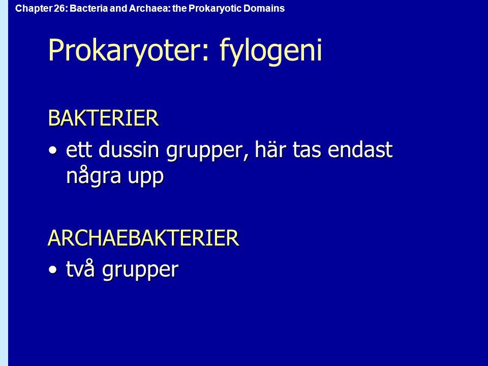 Prokaryoter: fylogeni