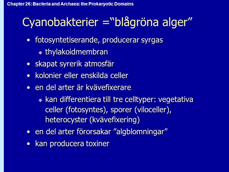 Cyanobakterier = blågröna alger