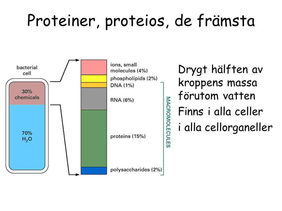 Proteiner, proteios, de främsta