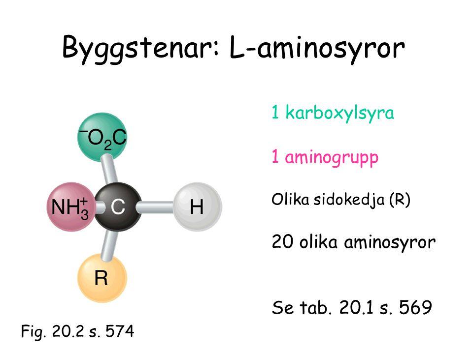 Byggstenar: L-aminosyror