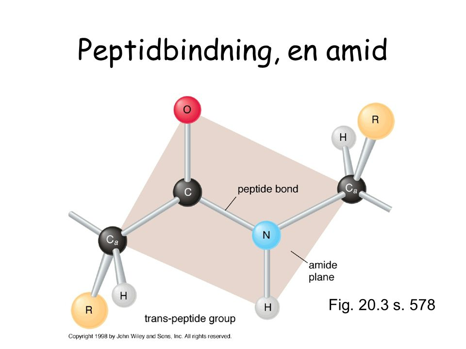 Peptidbindning, en amid