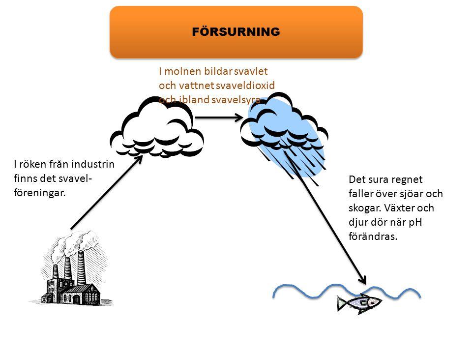 FÖRSURNING I molnen bildar svavlet och vattnet svaveldioxid och ibland svavelsyra. I röken från industrin finns det svavel-föreningar.