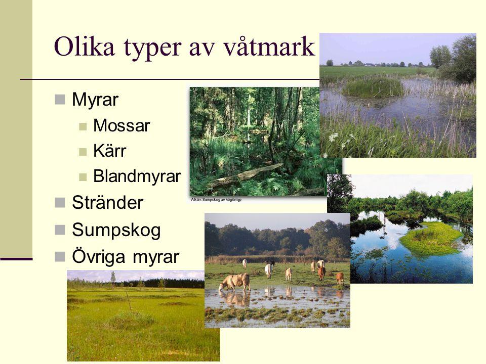 Olika typer av våtmark Myrar Stränder Sumpskog Övriga myrar Mossar