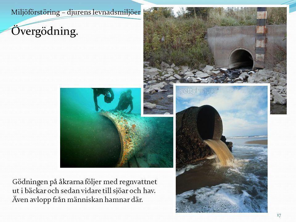 Övergödning. Miljöförstöring – djurens levnadsmiljöer försvinner.
