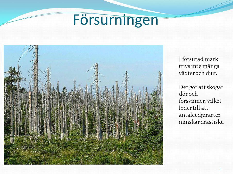 Försurningen I försurad mark trivs inte många växter och djur.