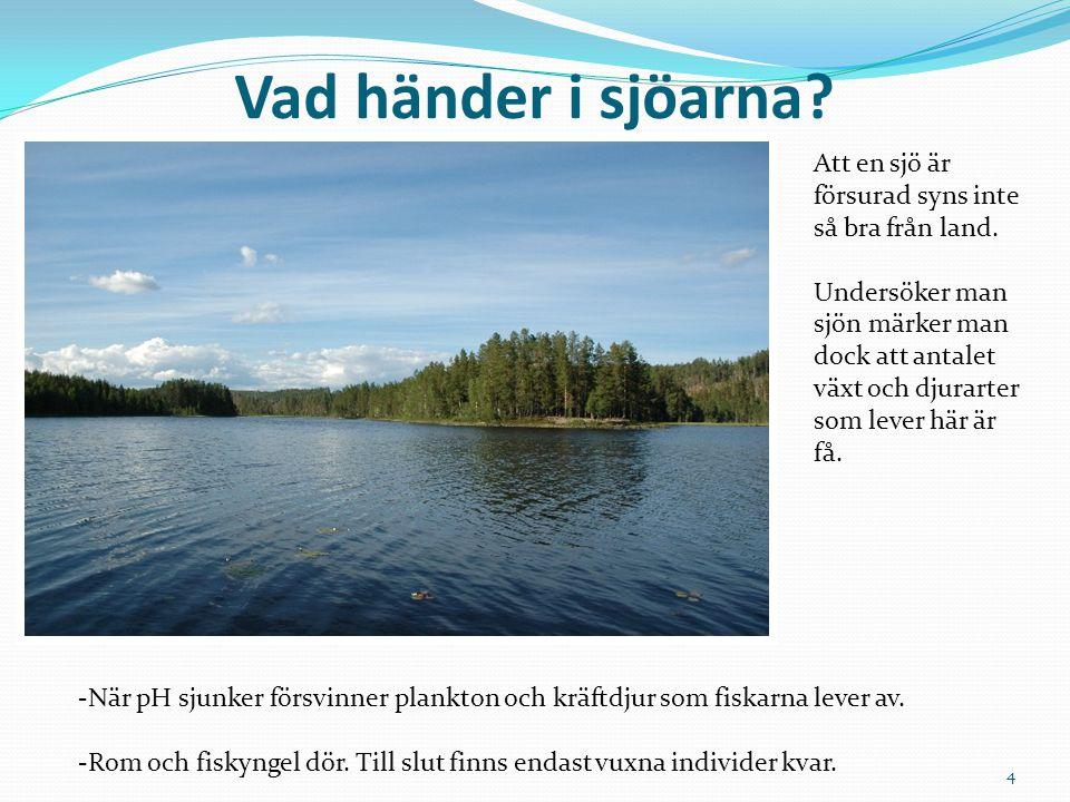 Vad händer i sjöarna Att en sjö är försurad syns inte så bra från land.